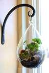 Hanging Terrarium Workshop