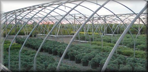 Linton's Enchanted Gardens : Nursery%20Sunset%202011 09 21%20web