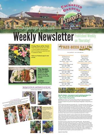 Linton's Enchanted Gardens : Lintons%20Newsletter%20Flyer