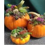 Workshop: Pumpkin Succulents